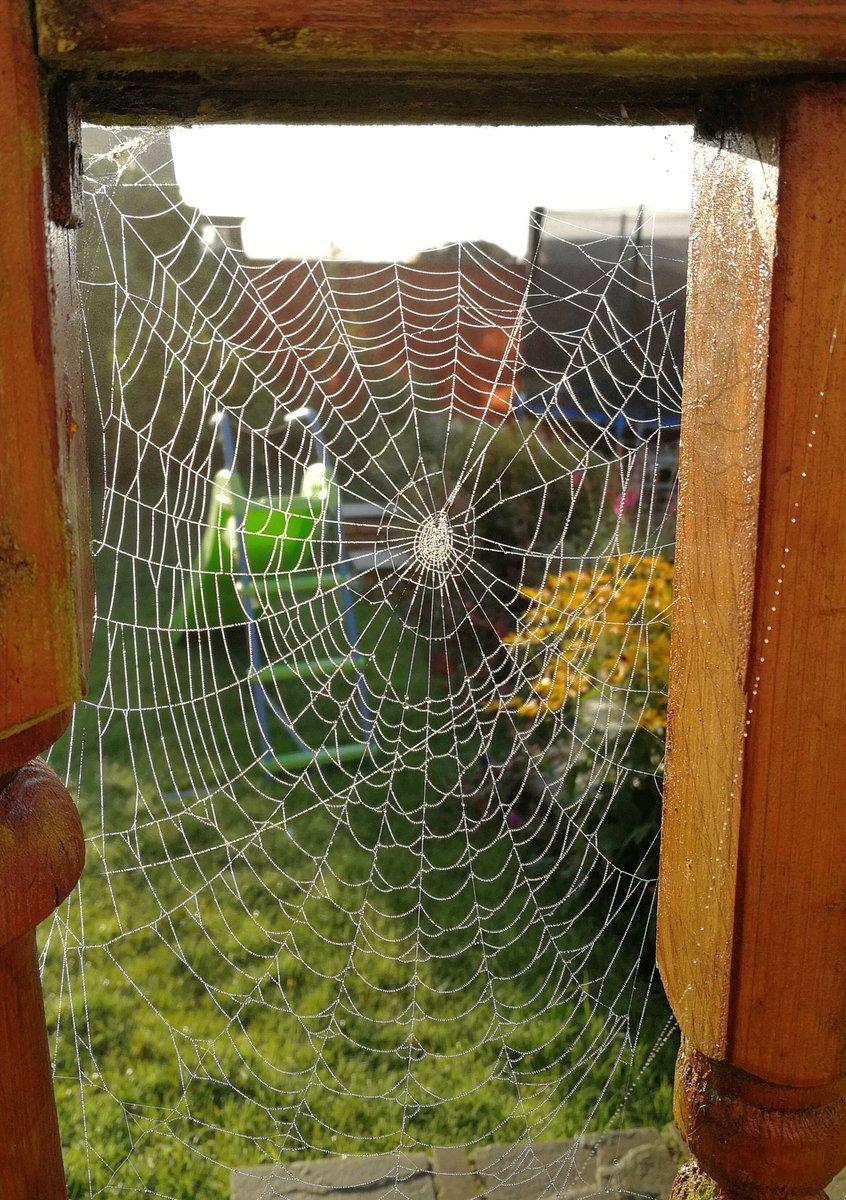 July Photo Winner - Spider's Web