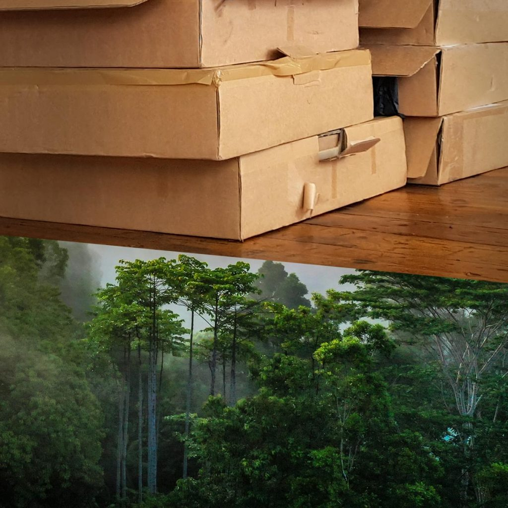 Turning cardboard boxes into rainforest trees